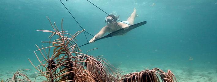 Free diving in Bocas del Toro