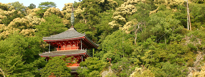 Japanese building and trees in Gifu